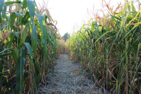 """World's Largest Corn Maze"" is A-MAZE-ing"